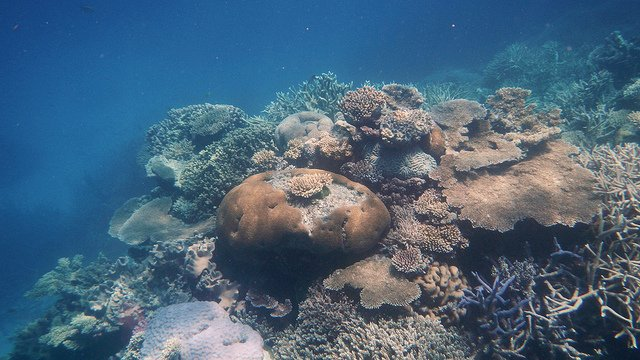 Protect Coral Reefs_2