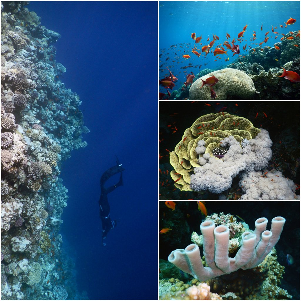 Best-coral-reef-in-the-world
