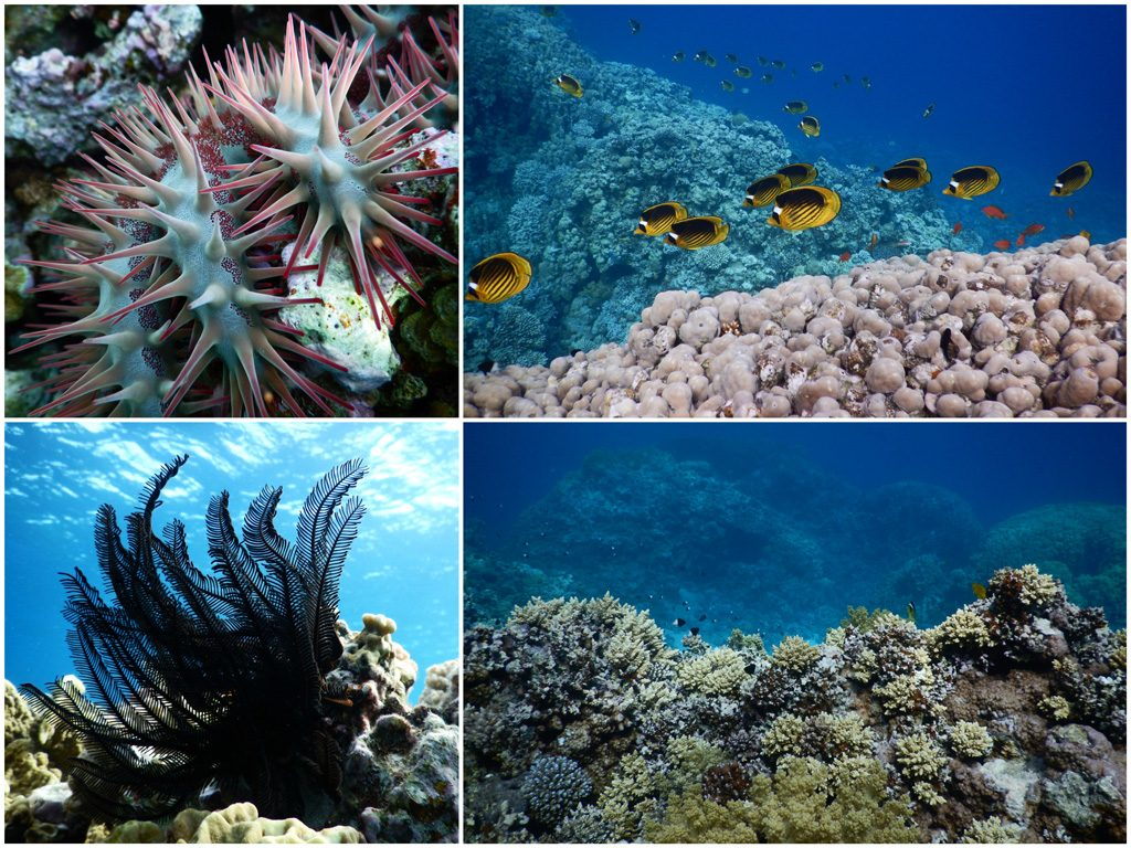 How-to-protect-coral-reefs - Abu-Galum-Dahab